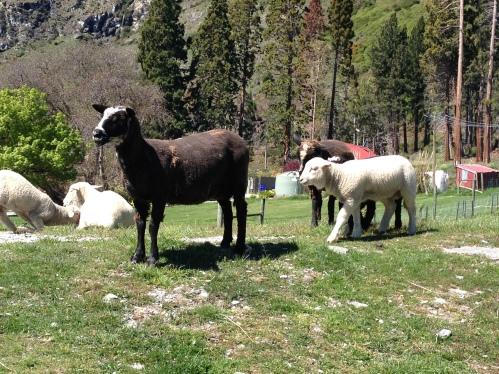 25. Queenstown walter peak farm visit pet sheep